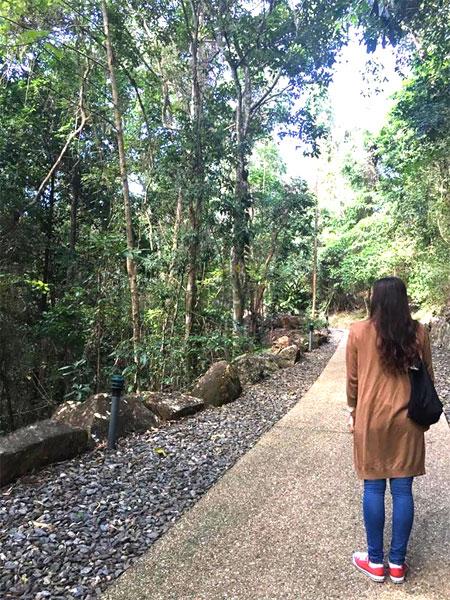 サイトに着くまでの熱帯雨林も素敵